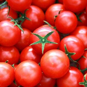 【ふるさと納税】★フルーツトマト 完熟 糖度8以上高糖度&高機能性 フルーツトマト3Kg送料無料 数量限定 ギフト D-95