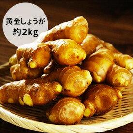 【ふるさと納税】コロナ 緊急支援 黄金しょうが 2kg 【野菜・根菜・生姜】 ジンジャー
