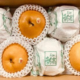【ふるさと納税】【数量限定】特選 カミの 新高梨 4kg箱(5〜6玉) 【梨・ナシ・果物・フルーツ・果物類・フルーツ・果物・フルーツ】 お届け:2020年9月中旬〜9月下旬