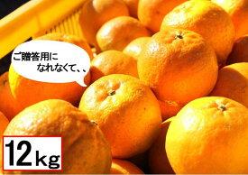 【ふるさと納税】U97 訳アリ 東洋町ポンカン 12kg