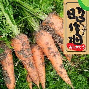【ふるさと納税】31M120c 【無農薬】生で食べてもあま〜い 土付きにんじん2.5kg