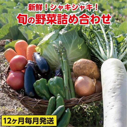 【ふるさと納税】ve003b 新鮮!シャキシャキ!旬の野菜詰め合わせコース(年12回 毎月発送!!) 寄付額45,000円