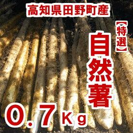 【ふるさと納税】≪予約受付中≫四国一小さなまち田野町産特選「令和2年産自然薯(じねんじょ)」0.7Kg 全然粘りが違います。汁物にしても溶けない粘りの強さを是非ご賞味ください。