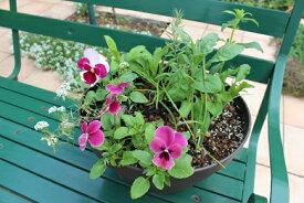 【ふるさと納税】北川村「モネの庭」から季節の寄せ鉢(レギュラーサイズ)