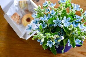 【ふるさと納税】焼き菓子とブルースターの花束〈しあわせのサムシングブルー〉送料無料※ギフト対応可能 スイーツ