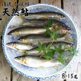 【ふるさと納税】仁淀川の天然鮎(8匹〜15匹)