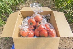 【ふるさと納税】(0062701)そらの訳ありトマト(約1.2kg)