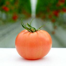 【ふるさと納税】Fbg-03 受付4か月で800件超え四万十産トマト「凛と」【予約受付】