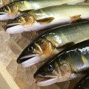 【ふるさと納税】Esj-40k四万十川上流の天然釣り鮎〈冷凍〉