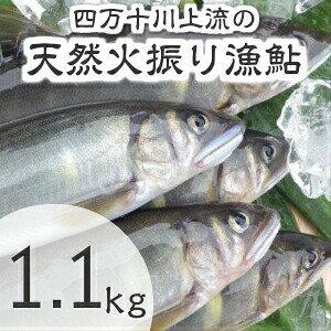 【ふるさと納税】Esj-12k 四万十川上流の天然鮎 新もの冷凍 火振り漁鮎(4〜14尾)