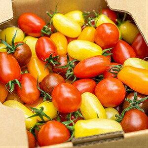 【ふるさと納税】Fbg-08 手間なしで華やかサラダに!四万十産ミニトマト「ミックス」1kg