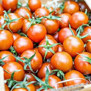 【ふるさと納税】しましま模様が美味しさのサイン!四万十産ミニトマト「ゼブラ」1kg Fbg-07