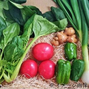 【ふるさと納税】Qhy-03 四万十町の新鮮野菜詰め合わせ5種類