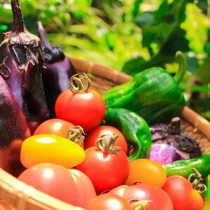 【ふるさと納税】お野菜の詰め合わせ
