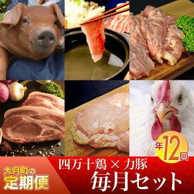 【ふるさと納税】【定期便】四万十鶏 × 力豚 年12回お届け