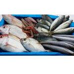 【ふるさと納税】[1076]漁師におまかせの鮮魚セットB