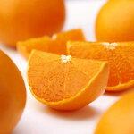 【ふるさと納税】[1201]高級柑橘温室せとか秀3L品10個入り