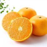 【ふるさと納税】[1202]高級柑橘温室せとか秀2L品5個入り
