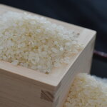【ふるさと納税】[0726]米作りの伝統を守る小川アグリの新米こしひかり5kg(白米)