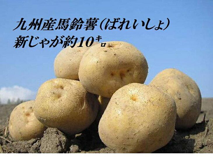 【ふるさと納税】【A145】青果市場厳選 九州産ばれいしょ(新じゃが)約10kg