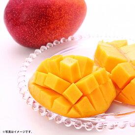 【ふるさと納税】事前受付 マンゴー 2個 合計約700g 果物 フルーツ 完熟マンゴー 国産 九州産 福岡県産 先行予約 送料無料【2021年7月下旬より順次発送予定】