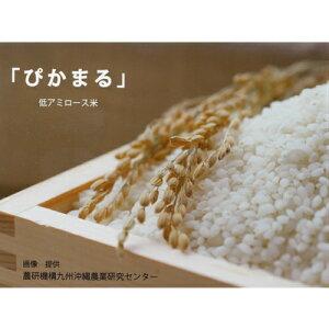 【ふるさと納税】令和元年産米 無農薬 低アミロース米「ぴかまる」<5kg>無洗米