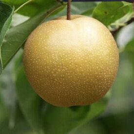 【ふるさと納税】今が旬な地元産の果物詰め合わせセット