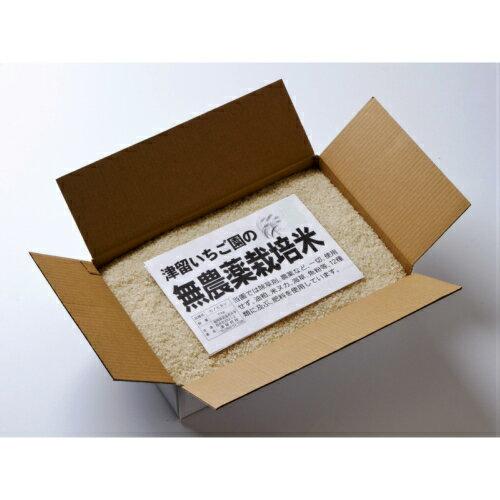 【ふるさと納税】無農薬米「ひのひかり」<6kg> 7分づき米