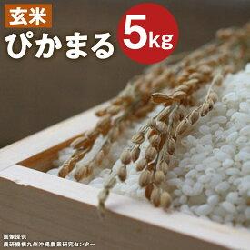 【ふるさと納税】低アミロース米 ぴかまる 5kg 玄米 保存袋付き 令和2年産 お米 栽培期間中無農薬 九州産 福岡県産 送料無料