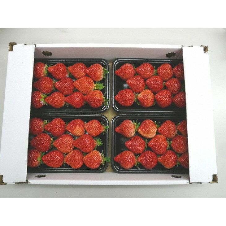 【ふるさと納税】【期間限定】完熟 あまおうイチゴ250g×4パック