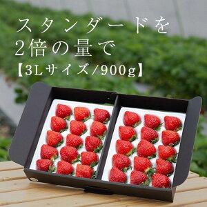【ふるさと納税】武下さんちのあまおうギフト 3Lサイズ900g入り