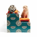 【ふるさと納税】ネコの階段箪笥青磁