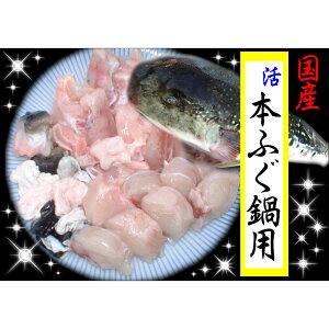 【ふるさと納税】国産活本ふぐ(とらふぐ)鍋用