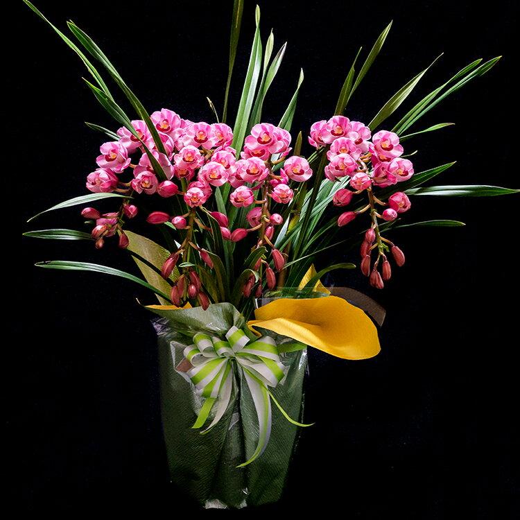 【ふるさと納税】洋ラン 草場農園(33,000円コース) 贈りもの お祝い お返し プレゼント に 鉢花
