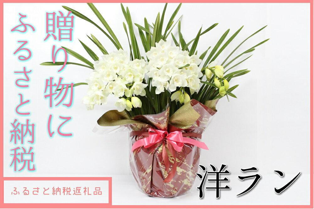 【ふるさと納税】洋ラン 草場農園(30,000円コース) 贈りもの お祝い お返し プレゼント 開店祝い に 鉢花