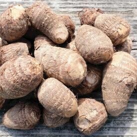【ふるさと納税】小郡産の里芋「白芽大吉」2.5kg【10月配送予約】