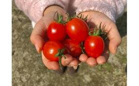 【ふるさと納税】高糖度フルーツトマトアイコ(1.2kg)_KA0375 送料無料