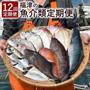 【ふるさと納税】12回 定期便 旬な魚介類を毎月お届け!福津の魚介類定期便 海産物 魚介類 魚 カキ 牡蠣 イカ 烏賊 サザエ まぐろ マグロ 貝類 地魚 タイ しゃぶしゃぶ 定期 5ヶ月 送料無料