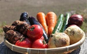 【ふるさと納税】UIC名水うきはの無農薬減農薬お野菜セットM