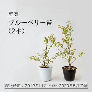 【ふるさと納税】里楽 ブルーベリー苗2本