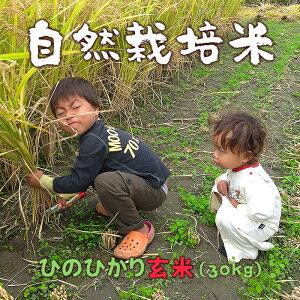 【ふるさと納税】 ぶんぶんファーム 自然栽培米(農薬・肥料不使用)ひのひかり 玄米 30kg (ヤーマンライス)