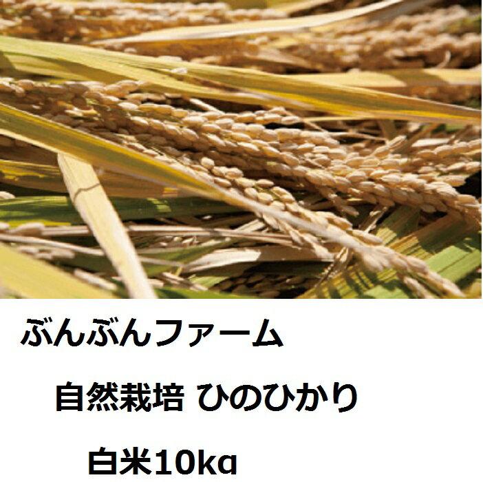 【ふるさと納税】ぶんぶんファーム 自然栽培 ひのひかり 白米10kg