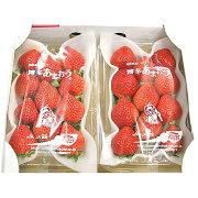 【ふるさと納税】あまおう贈答用約540g(約270g×2パック)福岡県産いちごイチゴフルーツ果物九州ギフト送料無料