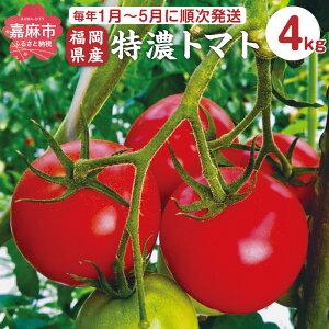 【ふるさと納税】極濃トマト 4kg 32〜40個 九州産 福岡県産 野菜 とまと 最高糖度12度 肉厚 濃厚 送料無料 【毎年1月〜5月に順次発送】