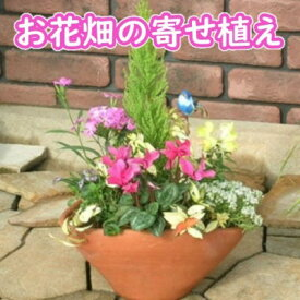 【ふるさと納税】可愛いお花畑の寄せ植え(Mサイズ) 【花】