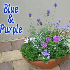 【ふるさと納税】爽やかな色合いブルー・パープルの寄せ植え 【植物】