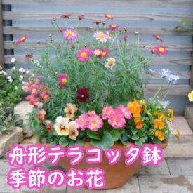 【ふるさと納税】可愛いピンクのお花たっぷりの寄せ植え 【花】