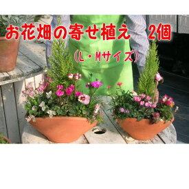 【ふるさと納税】可愛いお花畑の寄せ植えL・Mサイズ(2個セット) 【花・植物】
