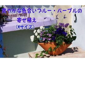【ふるさと納税】ブルー・パープルの寄せ植え(舟形Mサイズ)1個 【花・植物】