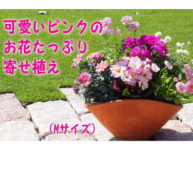 【ふるさと納税】可愛いピンクのお花たっぷりの寄せ植え(舟形Mサイズ)1個 【花・植物】